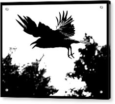 Black Bird Number 2 Acrylic Print
