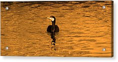 Black Bird On Surise Acrylic Print by Radoslav Nedelchev