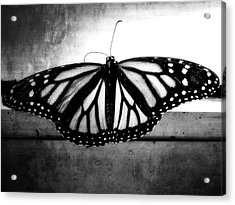 Acrylic Print featuring the photograph Black Butterfly by Julia Wilcox