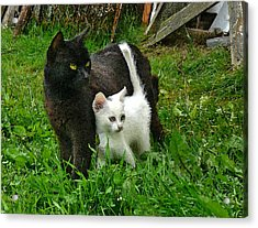 Black Cat Defends His White Kitten Acrylic Print