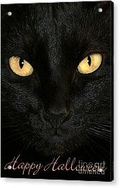 Black Cat Halloween Card Acrylic Print