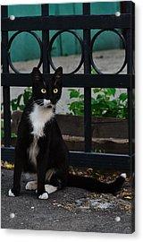 Black Cat On Black Background Acrylic Print