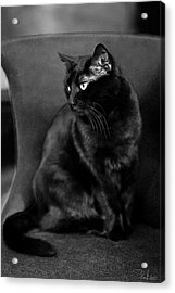 Black Cat Acrylic Print by Raffaella Lunelli