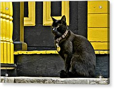 Acrylic Print featuring the photograph Black Cat Yellow Trim by Williams-Cairns Photography LLC