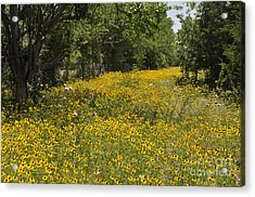 Acrylic Print featuring the photograph Black Eyed Susan by Cheryl McClure
