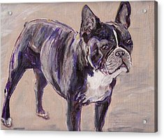 Black Frenchie Acrylic Print by Arthur Rice