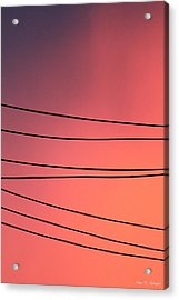 Black Lines And Night Skies  Acrylic Print by Amy Gallagher