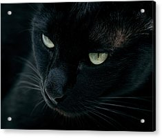 Black Panther Acrylic Print by Laura Melis