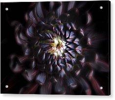 Black Purple Dahlia - Flower Photograph Acrylic Print by Artecco Fine Art Photography