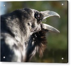 Black Raven Talk Acrylic Print by Cindy Wright