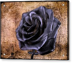 Black Rose Eternal   Acrylic Print by David Dehner