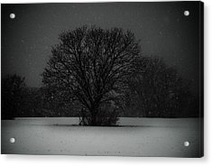 Black Snow Tree Acrylic Print by Sonja Quintero