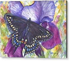 Black Swallowtail Butterfly Acrylic Print by Patricia Allingham Carlson