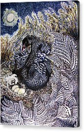 Black Swan Mother And Child Acrylic Print