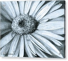 Black White Gerber Acrylic Print