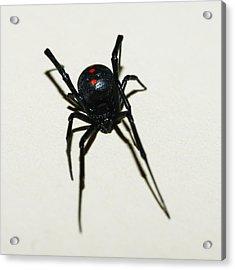 Black Widow Polka Dots Acrylic Print by David Waldo