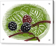 Blackberries, Woodcut Acrylic Print by Gary Hincks