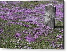 Blank Colonial Tombstone Amidst Graveyard Phlox Acrylic Print by John Stephens
