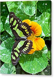Blend My Colors Acrylic Print