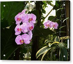 Acrylic Print featuring the photograph Bliss by Sheila Silverstein