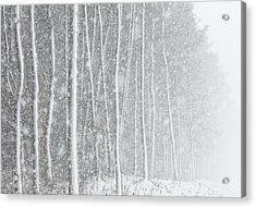 Blizzard Blankets Trees In Snow Acrylic Print by Douglas MacDonald