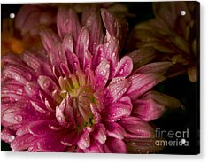 Bloom Acrylic Print by David Taylor