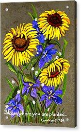 Bloom Acrylic Print by Elaine Hodges