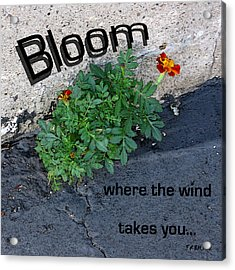 Bloom Where The Wind Takes You Acrylic Print