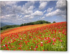 Blooming In The Plateau Acrylic Print by Tad Kanazaki