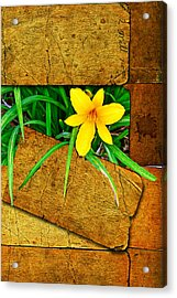 Blooming Out Acrylic Print