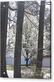 Blooming Tree Acrylic Print by Marlene Robbins
