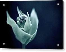 Blooming Wild Flower Acrylic Print by Alexandre Fundone