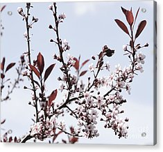 Blossoms In Time Acrylic Print