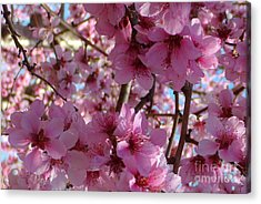 Acrylic Print featuring the photograph Blossoms by Lydia Holly