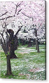 Blossoms Of The Heart Acrylic Print by Mitch Cat