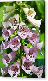 Blow The Trumpet Flora Acrylic Print by Andee Design