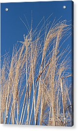 Acrylic Print featuring the photograph Blowing In The Wind by Barbara McMahon