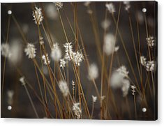 Acrylic Print featuring the photograph Blowing In The Wind by Vicki Pelham