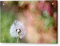 Acrylic Print featuring the photograph Blown Away by Lynnette Johns