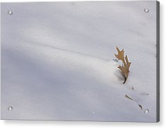 Blown Snow And Oak Leaf Acrylic Print