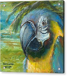 Blue And Gold Macaw By The Sea Acrylic Print by Bernadette Krupa