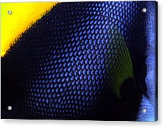 Blue And Yellow Scales Acrylic Print