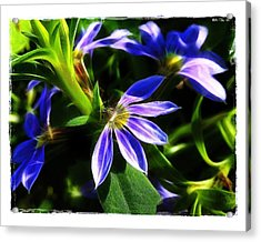 Acrylic Print featuring the photograph Blue Ballet by Judi Bagwell