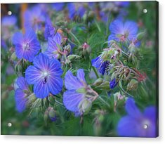 Acrylic Print featuring the photograph Blue Beauties by Robin Regan