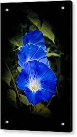 Blue Beauty Acrylic Print by Swift Family