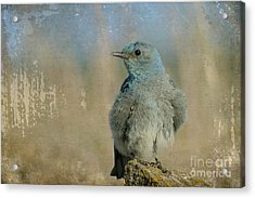 Blue Bird Acrylic Print