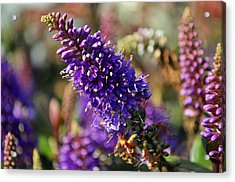 Acrylic Print featuring the photograph Blue Brush Bloom by Tikvah's Hope