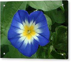 Blue Burst Acrylic Print