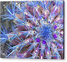 Blue Cactus Acrylic Print by Rebecca Margraf