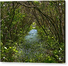 Blue Carpet In The Woods. Acrylic Print by Edgar Anderson